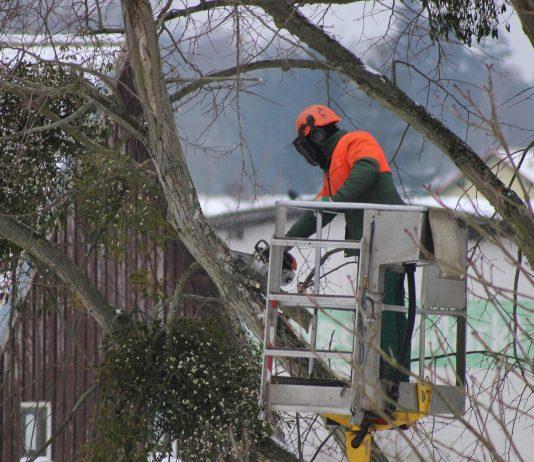 Baumpflegearbeiten - Baumschnitt